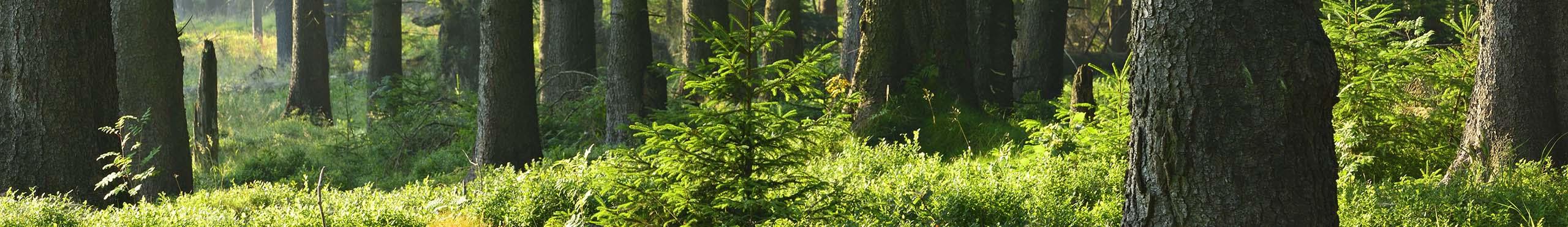 Fiscalité : La forêt pour mieux transmettre votre assurance-vie